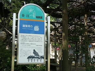 fujiwasi04.jpg